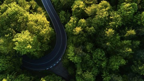 aerial view of road between trees